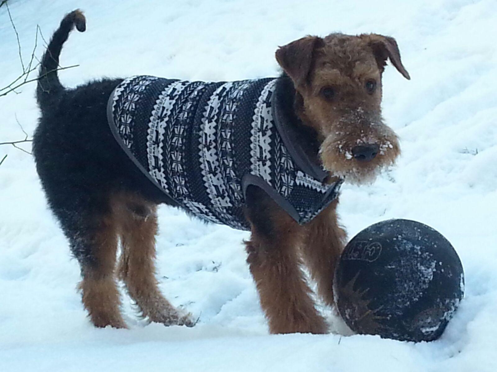 Airedale Terrier und Winterfußball