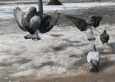 Abflug - Winter 2010