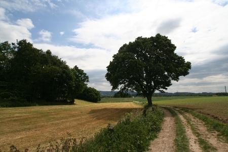 Der alter Baum