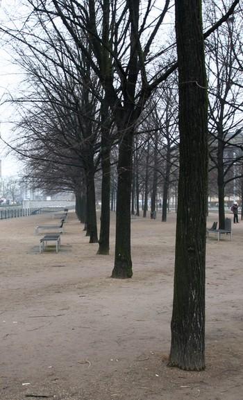 Bäume vor dem Berliner Dom