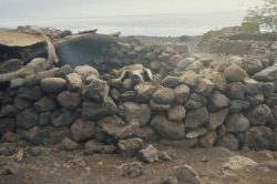 Ein Schwein auf den Kapverdischen Inseln