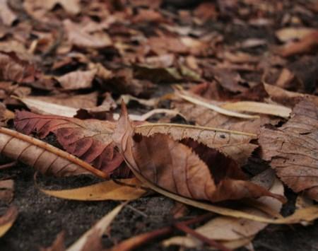 Blätterwald - Herbst 2009