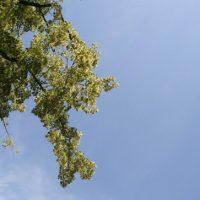 Blauer Himmel mit Laub