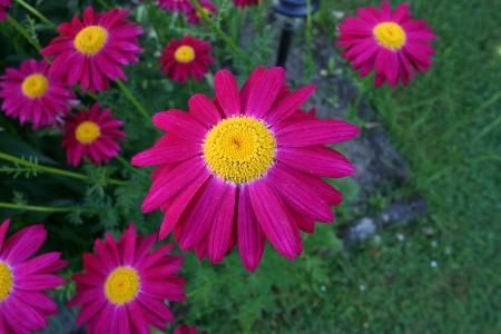 Blumenbild der Woche