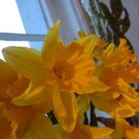 Gelbe Blumen in Berlin