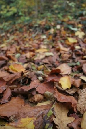 Ein Wald voller Blätter