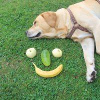 Der Hund schläft, das Gesicht lacht