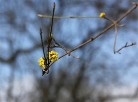 Der Frühling in Kreuzberg