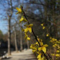 Gelbe Blüten im Frühjahr