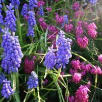 Rote und blaue Blumen