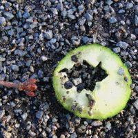 Eine Gurkenscheibe mit Loch