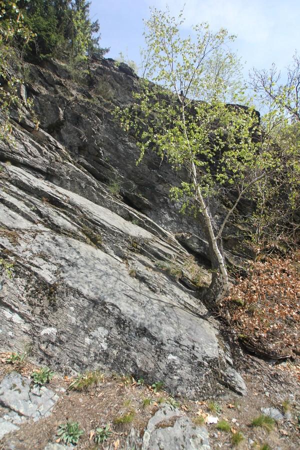 harz-wanderung-baum-und-steinwand