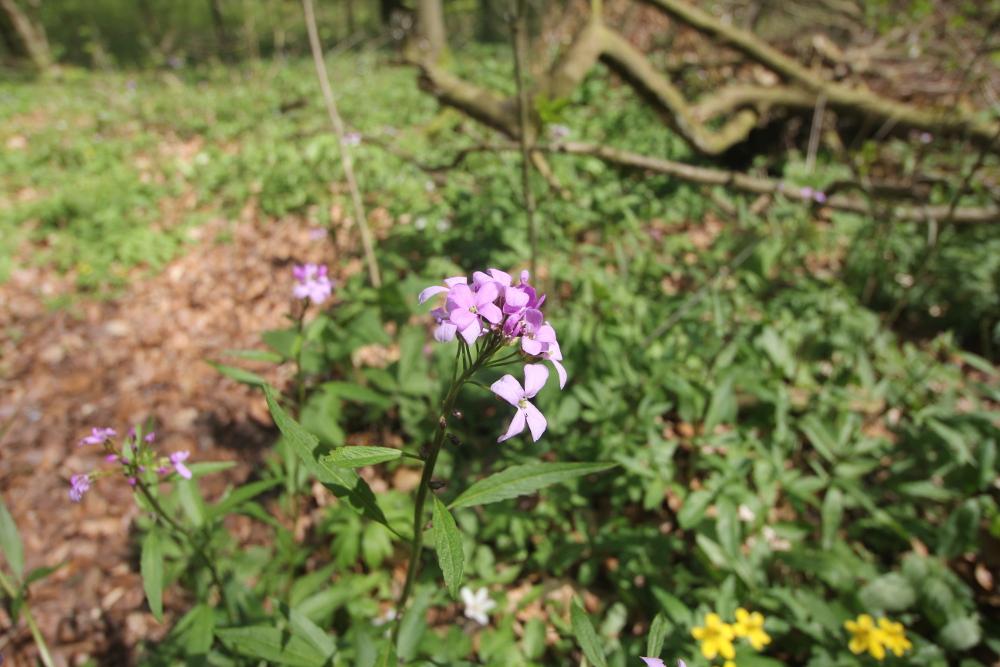 harz-wanderung-pflanzen