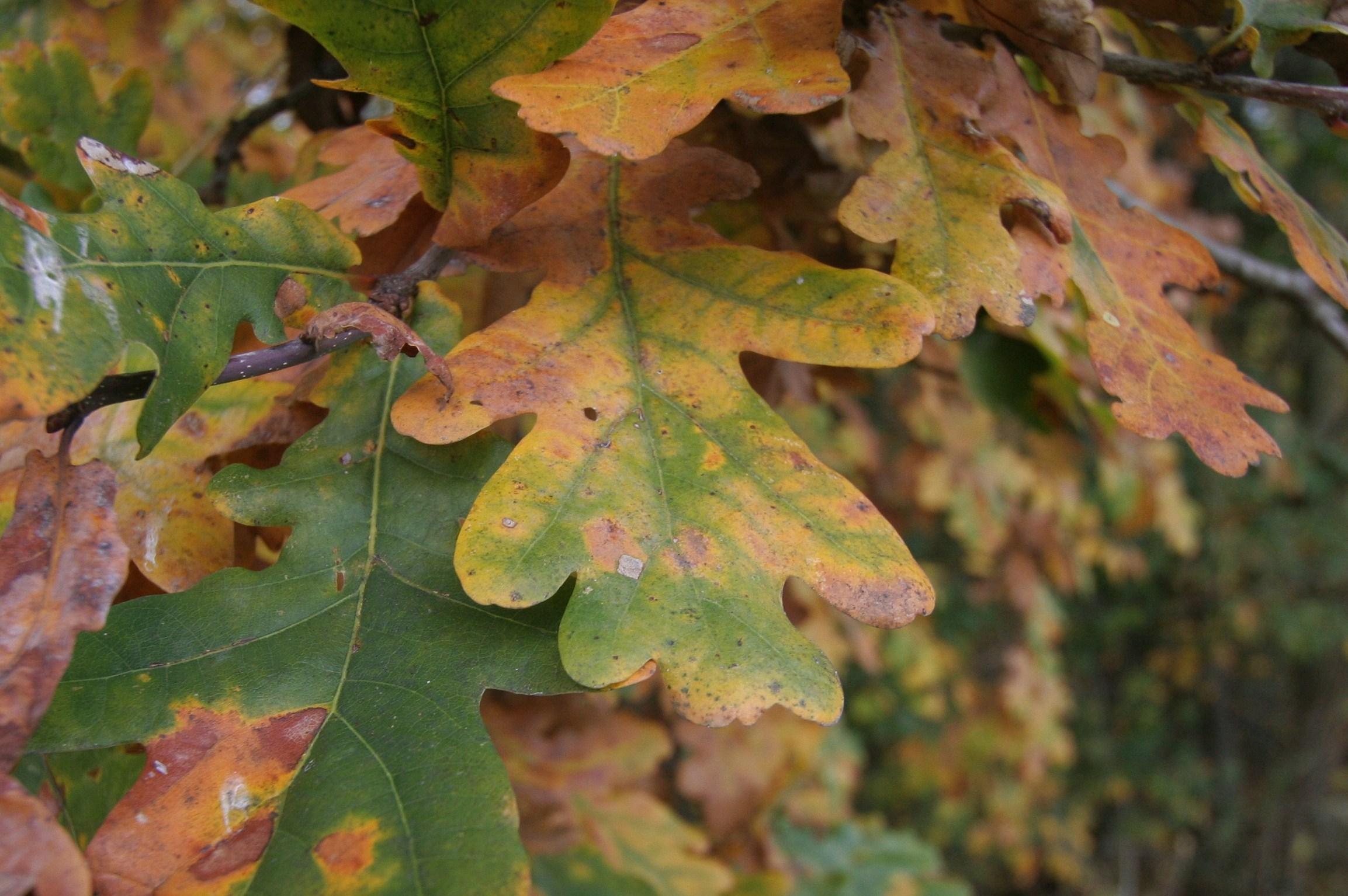 2009: Herbstfarben - Herbstblätter!