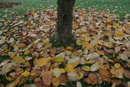 Der Apfelbaum im Herbst
