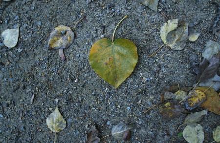 Ein Herz im Herbst