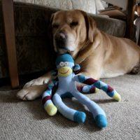 Labrador und Affe