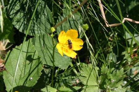 Die Fliege in der Blüte