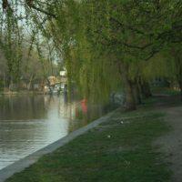 Trauerweiden am Berliner Landwehrkanal