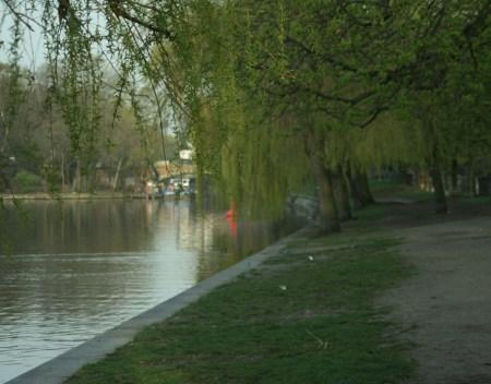 Die Bäume am Berliner Landwehrkanal