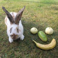 Kaninchen und Gesicht