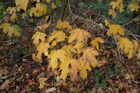 Blätter am Baum und Boden