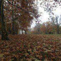 Herbstspaziergang durch Kreuzberg