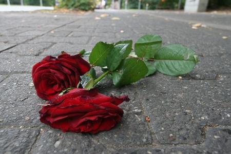 Die roten Rosen auf dem Radweg