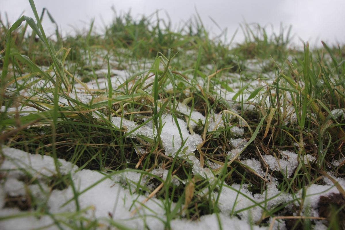 Schnee im Grass