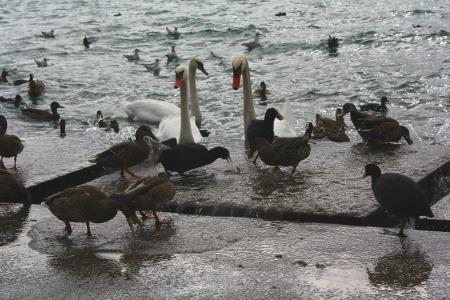 Tierparty am Zürichsee