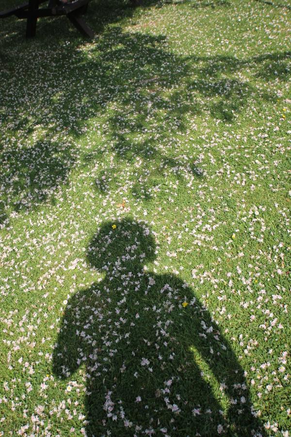 Schattenselfie unter dem Kastanienbaum