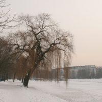 Winter 2010: Trauerweide am Urbanhafen