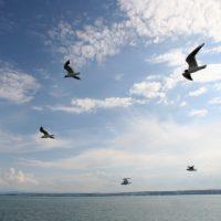 Vogelfrei über dem Bodensee