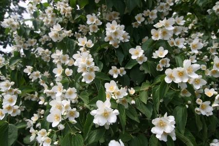 Ein meer von wei en pflanzen detlef henke fotoblog for Pflanzen laden berlin