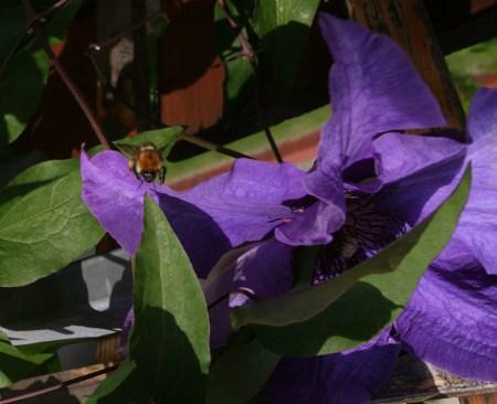 Fliege, Wespe oder Biene - Die lila Blume und ein Insekt...
