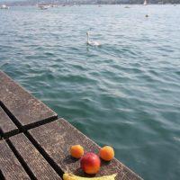 Zürichsee mit Gesicht und Schwan